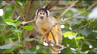 Keeper diary: David Waite - Primates