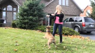 ZaidAliT - White people vs. Brown people with dogs..