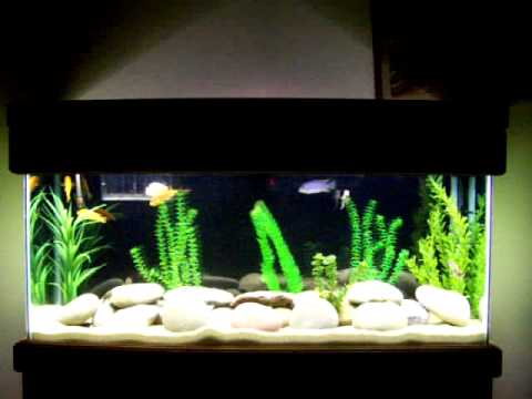 55 Gallon Aquarium Fish Tank River Rock & Sand Theme With Assorted African Cichlids and Babies Fry.