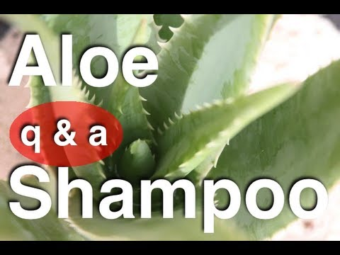 Homemade Aloe Vera Shampoo Q&A: Lather, Oil, Natural Aloe Juice, Conditioner, Mousse 3of3