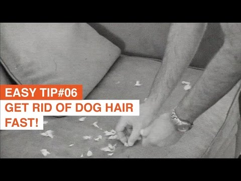 Remove dog hair from your furniture - Easy Life