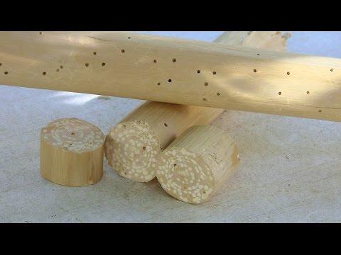 Bugs in my wax wood staff