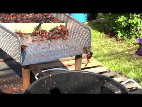 Crawfish Alive