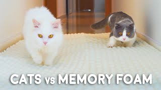 Can Munchkin Cats Walk On Memory Foam Mat?