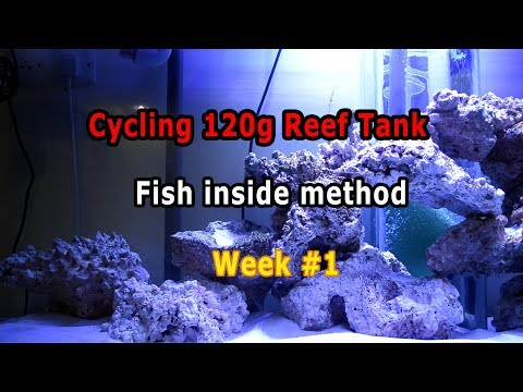 HOW TO cycle reef tank E2, Week #1 | How To Accelerate Aquarium Cycle in 2 weeks