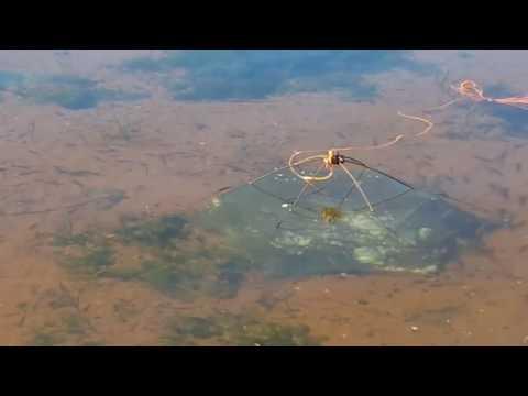 amazing  minnow trap fishing