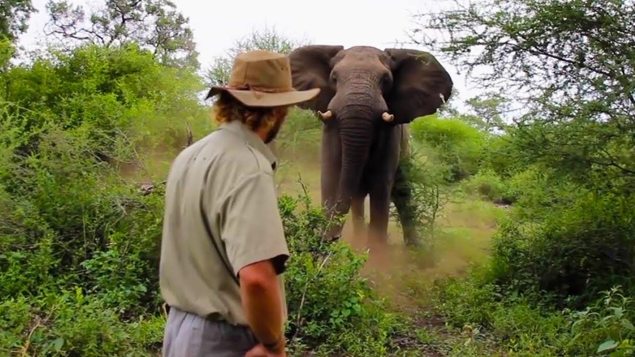Man Stops Charging Elephant