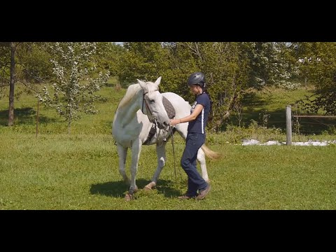 Simple groundwork to help a horse relax