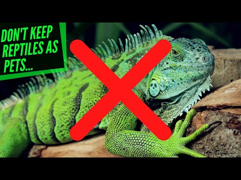 I don't think reptiles should be kept as pets?