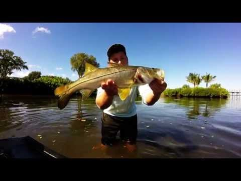 Fishing Tampa Bay Shallow Snook and Redfish