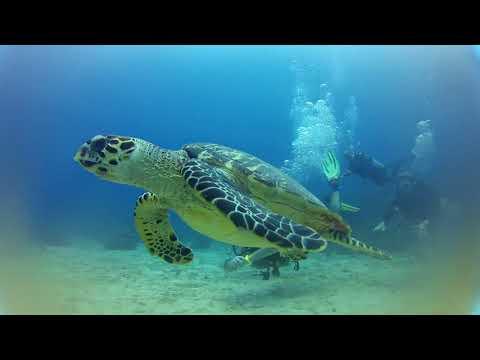 Roatan Marine Park - Update 2017