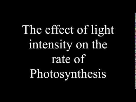 Effect of Light Intensity on the rate of Photosynthesis.