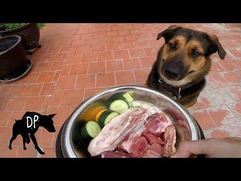 Raw Fed German Shepherd Mix | Raw Dog Diet #63