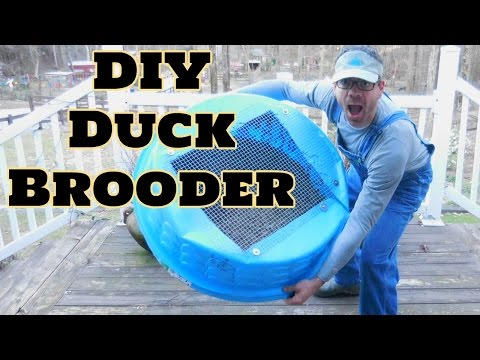 BEST DIY Duck Brooder! EASY TO CLEAN! How To Make a Duck Brooder or Chick Brooder