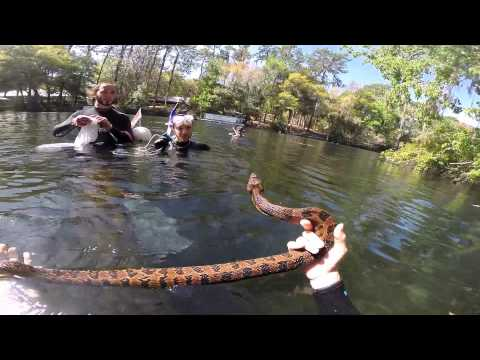 Catch and release of a Brown Water Snake