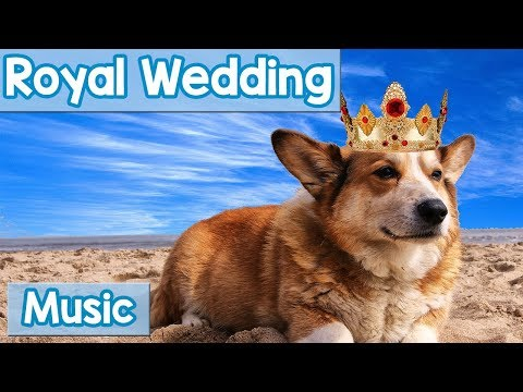 Dog Music for the Royal Wedding! Music to Calm Your Dogs Excitement on the 2018 Royal Wedding Day!