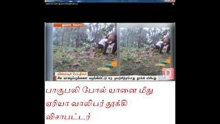 Download Elephant attack in Kerala பாகுபலி போல் யானை மீது ஏரியா வாலிபர் தூக்கி விசாபட்டர் Video