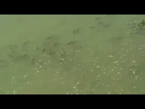 Private fish farms in Pakistan