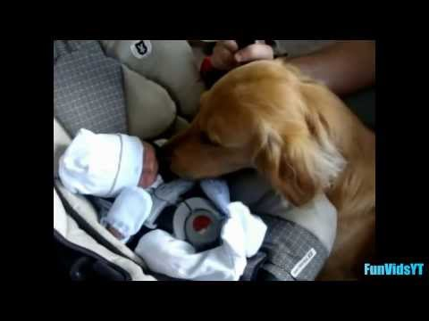 Dogs Meeting Babies For First Time Compilation 2014 [NEW HD] ✔