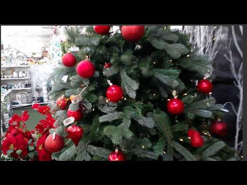 CHRISTMAS TREE HUNTING   DECK THE HALLS Pt 1