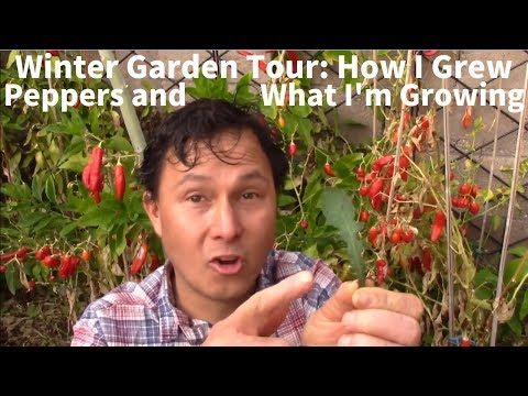 Winter Garden Tour: How I Grew Peppers & What I'm Growing Right Now