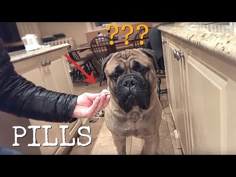HOW TO GIVE PILLS TO A 165 LBS BULLMASTIFF!!!
