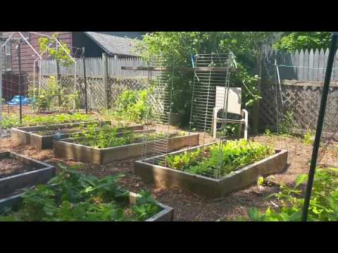 Protecting your garden from birds 3 mistakes I made before I found perfect solution.