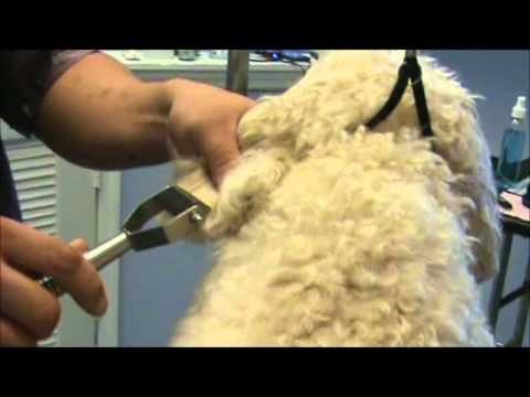 How to Comb Out Tangles and Matted Hair