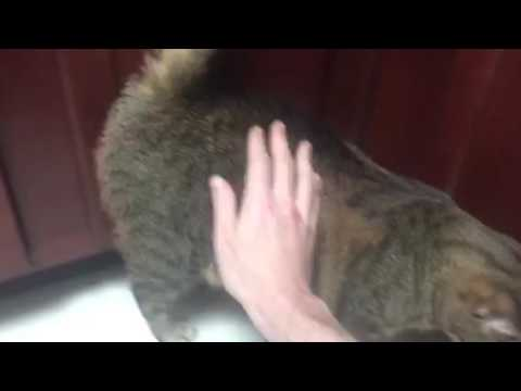 Bronx head butting cabinets