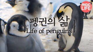 Life of penguins - Tears of the Antarctic EP01, #02, 얼음대륙 남극의 주인인 펭귄의 삶
