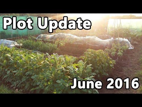 Plot Update June 2016