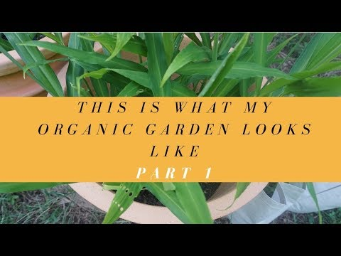 This is what my Organic garden looks like Part 1