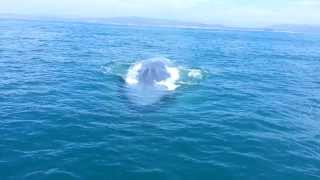 Close Encounter With Blue Whale At Dana Point