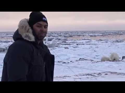 Sri Lankan man filming Polar bear in the Canadian Arctic