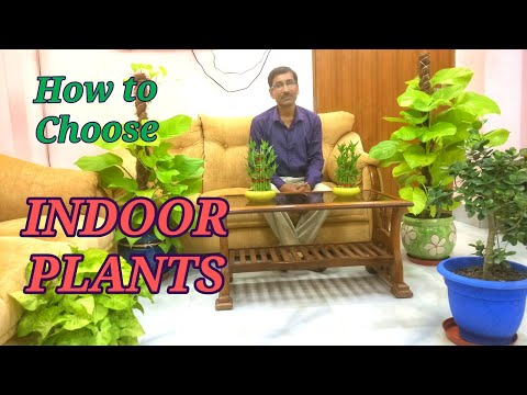 How to choose Indoor Plants. Caring Tips for Indoor Plants.