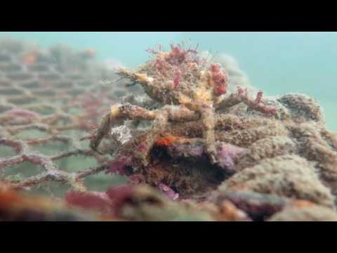 Cray Pot Recovery with Ghost Fishing NZ