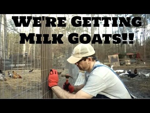 We Are Getting Nigerian Dwarf Milk Goats on the Homestead!  Time To Build  DIY Dairy Goat Pen!