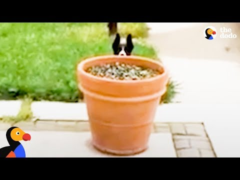 Dog Hides Behind Flower Pot to Stay Outside Longer | The Dodo