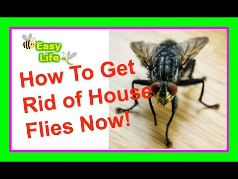 How to Get Rid of House Flies - Easy Life Now