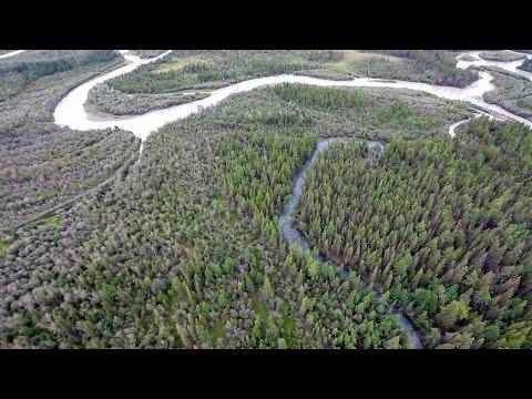 Celebrating 60 Million Trees