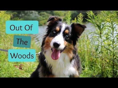 Finally Out of The Woods! - Vlog 19 (2017)