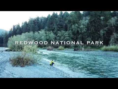 The Best of Redwood National Park