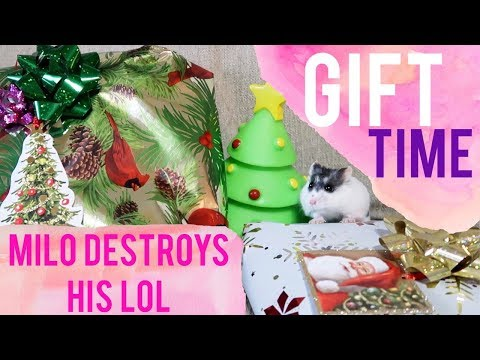 Spoiling My Pets | Animals Opening Christmas Presents