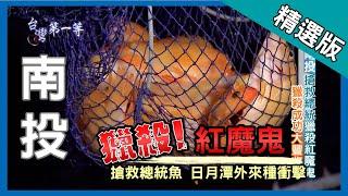 台灣第一等【搶救總統魚 獵殺紅魔鬼】南投日月潭 _精選版