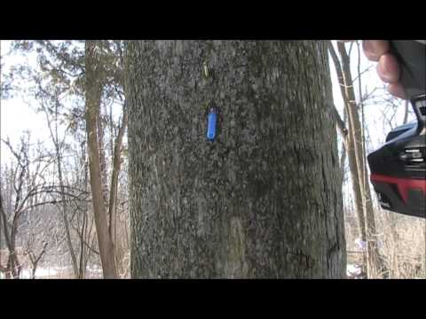 How To Make The Worlds Simplest & Cheapest Maple Sap Tap