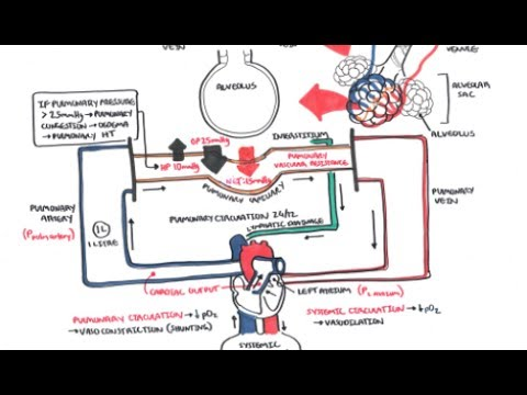 Respiratory System Physiology - Pulmonary Vascular Physiology Pressure and Hypertension