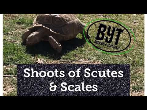 Getting tortoise enclosures ready for Spring! BYT's Shoots of Scutes & Scales