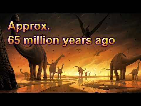 Does the Evidence Support Creationism? (Part 2 of 6: Transitional Fossils)
