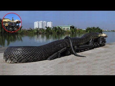 Xxx Mp4 7 Biggest Snakes Ever Found 3gp Sex