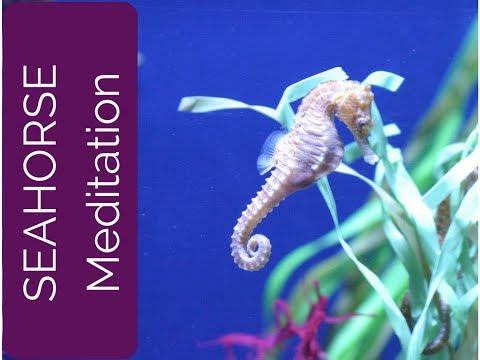 Seahorse Spirit Guide guided meditation (Spirit Animal, Power Animal and Totem Series)